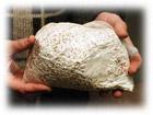 Получение грибницы (мицелия)